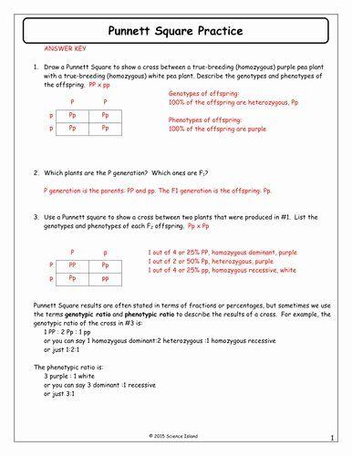 Punnett Square Practice Problems Worksheet New 7 Punnett Square Practice Answer Keycx Practices Worksheets Punnett Squares Genetics Practice Problems Genetics practice problems worksheet answers