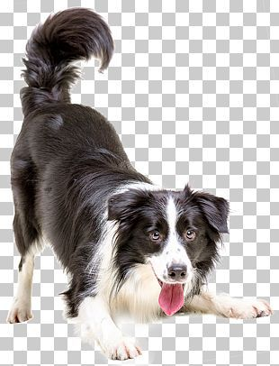 Puppy Png Images Puppy Clipart Free Download Pets Cats Collie Puppies Border Collie Puppies