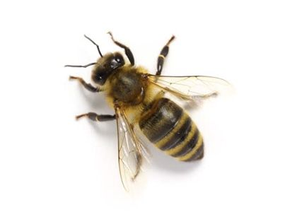 Like My Look Tag Someone Who Would Wear It Bee Removal Bee Keeping Honey Bee Removal