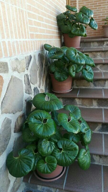 Plantas De Hojas Grandes Para Exterior