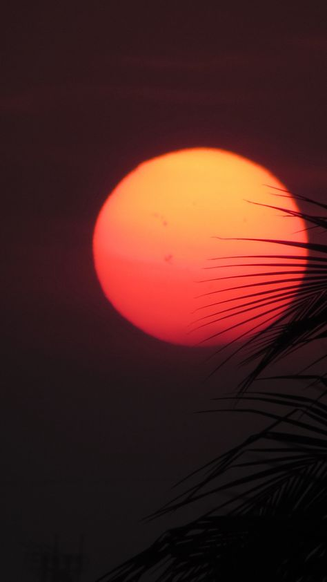 Red Orange Sun Leaves Iphone Wallpaper In 2020 Iphone Wallpaper