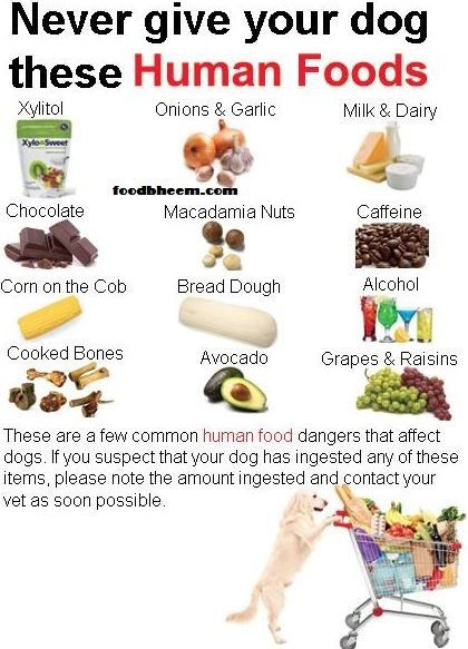 Best Pet Food For Dogs Nutrition Organic Homemade Dog Diet Chart