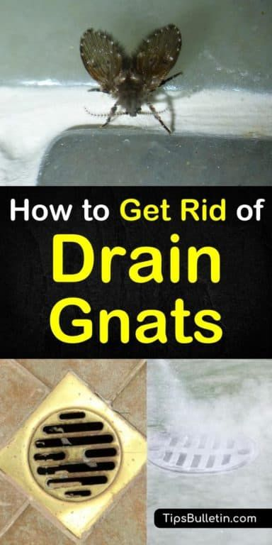 4 Amazingly Simply Ways To Get Rid Of Drain Gnats How To Get Rid Of Gnats Cleaning Hacks House Cleaning Tips