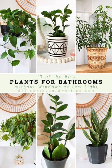 Check out some of the best plants for Bathrooms, even if you don't have a window! Delineate Your Dwelling bathroomplants 214835844711761330 Best Indoor Plants, Indoor Garden, Garden Plants, Outdoor Gardens, Best Plants, Indoor Window Plants, Flowering House Plants, Tropical House Plants, Indoor Planters