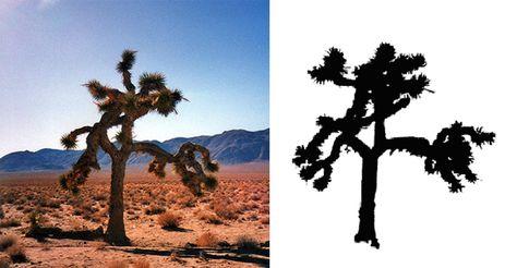 "The Actual U2 ""The Joshua Tree"" Died In 2000 | FeelNumb.com"
