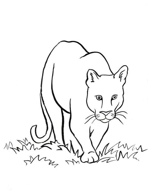 Coloring Page Mountain Lion2 Lots Of Easy Animals To Draw
