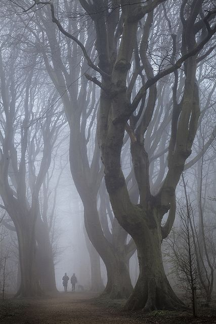 U.K. A misty morning in Stanmer Park, Brighton, East Sussex, England