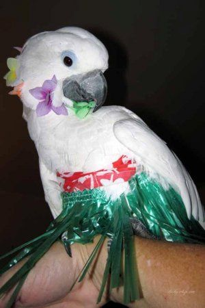 ... for halloween laurelwood animal hospital; y2016 this is gabby who ped away a month ago she was great; craftionary; childrens bird costume meningrey ... & Halloween Costumes For Birds - The Halloween