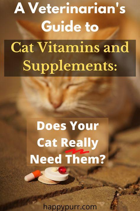 45 Cat Health Tips Ideas Cat Health Cats Health Tips