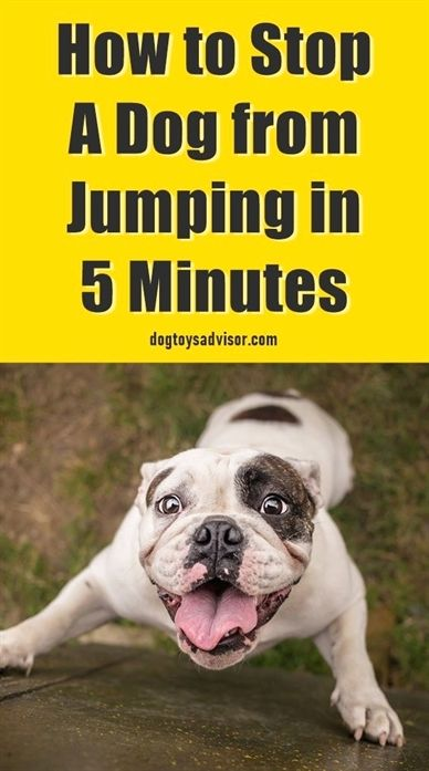 Dog Training Indiana Dog Training Raleigh Nc Dog Training Most