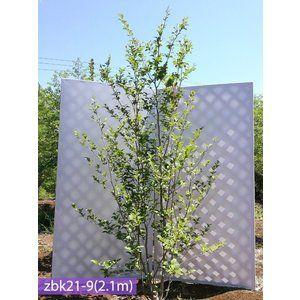 外構 おしゃれまとめの人気アイデア Pinterest Shion F 庭 木 ナツツバキ シンボルツリー