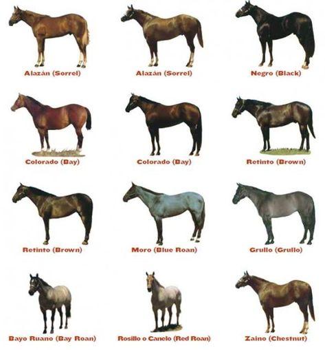 Capas del Caballo: Aquí los diferentes colores y particularidades del caballo