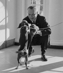 Lbj Him And Her 2 Pomeranian Puppy Beagle Puppy Cavoodle Dog