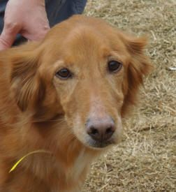 This Is Sally 8 Yrs She Is An Owner Surrender Due To A Move