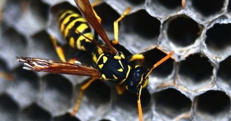 10 Cleaning Habits To Blame For Your Messy Home Get Rid Of Wasps