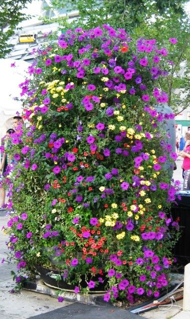riot of hanging flowers in Churchill Square