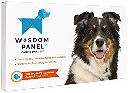 Dna My Dog Vs Wisdom Panel Vs Embark 2019 Reviews Comparison E Book