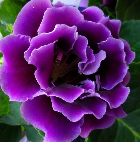 beautiful Violet color