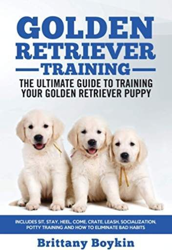 Golden Retriever Training The Ultimate Guide To Training Your