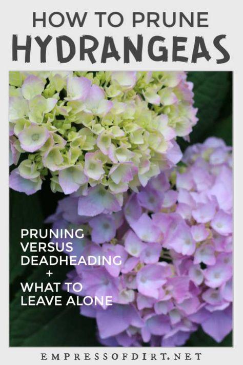 Hydrangea Pruning Guide For Beginners Empress Of Dirt In 2020 Pruning Hydrangeas When To Prune Hydrangeas Hydrangea Care