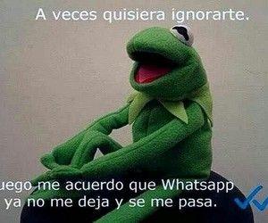 Buenas Noches Good Night Buenas Noches Y Rana Rene Humor Muppets Funny