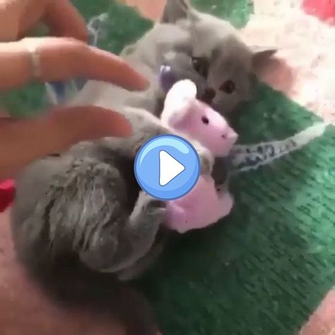 Hooman hooman we talked about dis.. - Kittens - Ideas of Kittens #Kittens -  This is mine! You get your own. No touchie touchie  The post Hooman hooman we talked about dis.. appeared first on Cat Gig.