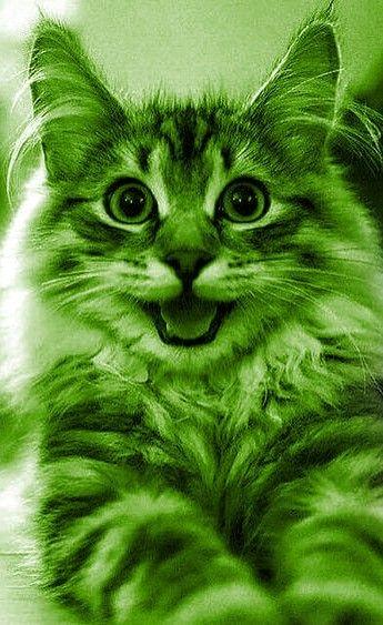 Green Cute Kitten Color Of Life Green Lantern Simple Green