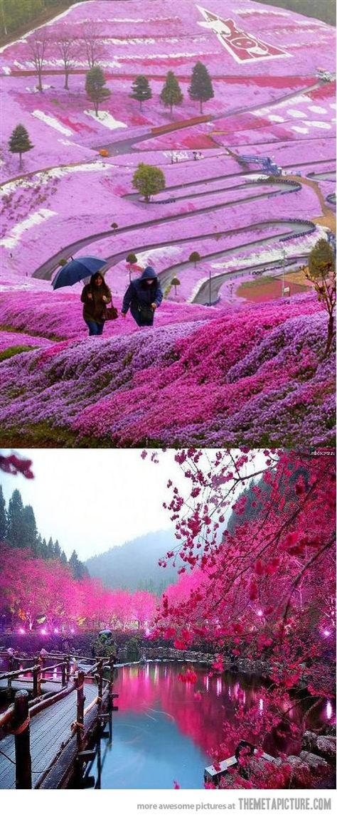 Beautiful Fields in Hillside Hokkaido, Japan >>> This is so magical. I would love to see this in real life.