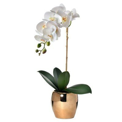 Bloomsbury Market Phalaenopsis Orchids Stem In Pot