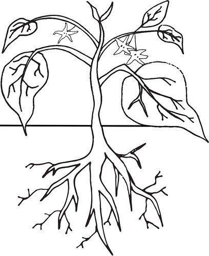 Dibujos De Plantas Para Colorear Imagenes De Plantas Para Ninos