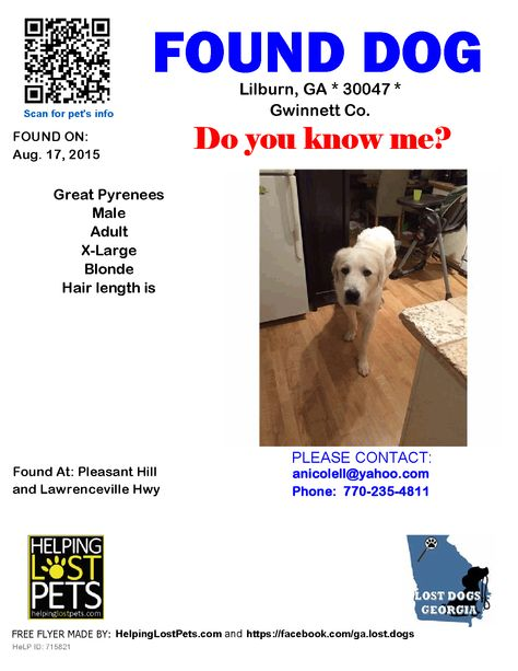 Found Dog Great Pyrenees Lilburn Ga United States Dogs