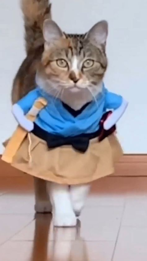 Funny Cat Costumes - Free Shipping Worldwide, 75% Off Just Today, Refund Money Fully, 100% Guarantee, Buy it now online from wizzgoo
