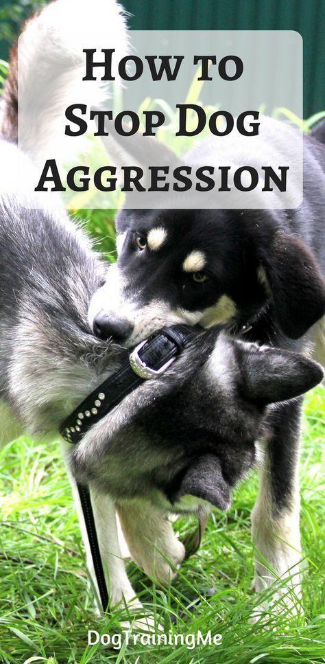 Snotty Dog Training Come Dogwithenergy Dogcollarideas Aggressive Dog Dog Training Angry Dog