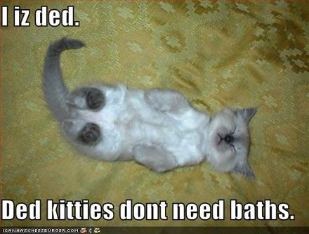 Dead Kitties Dont Need Baths Funny Animal Images