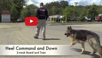 Dog Training Services In Las Vegas Nevada Usa We Are Offering