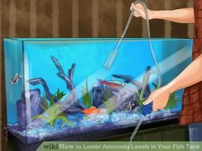 6ce9884e438753d9de816529749ec7e4 - How To Get Ammonia Out Of My Fish Tank