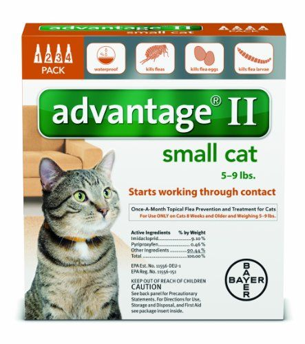 To Understand Of Your Cat Behavior Flea Treatment For Kittens