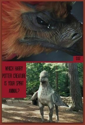 Which Harry Potter Creature Is Your Spirit Animal Harry Potter Hauser Harry Potter