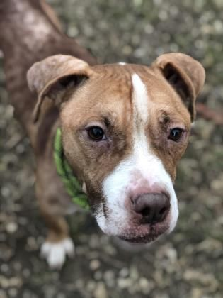 Mickey Located In Philadelphia Pa Has 6 Days Left To Live Adopt