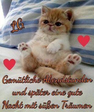 Guten Abend Gute Nacht Grusse Gute Nacht Gute Nacht Katze