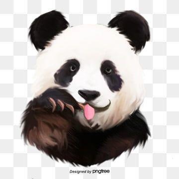Panda Panda Clipart Hand Painted Panda Png Transparent Clipart Image And Psd File For Free Download Panda Art Cat Illustration Cute Panda Wallpaper