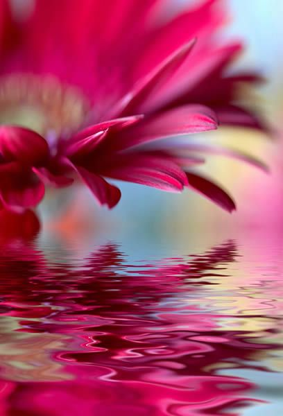 Water Flower photos printed on framed canvas   Dezign With a Z