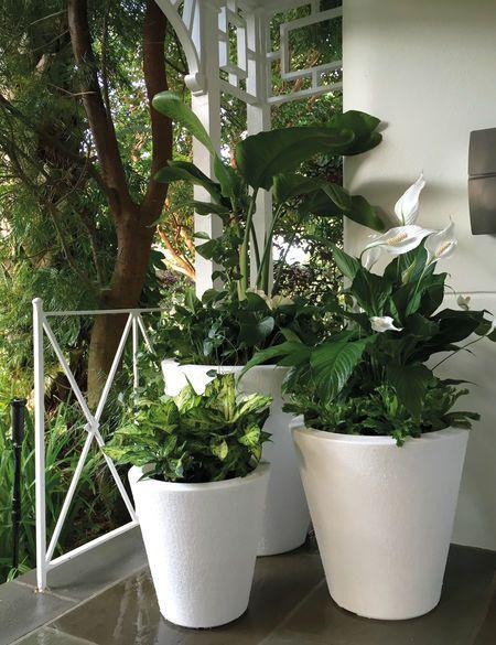 Dot Trudrop Self Watering Planters Gardener S Supply Self