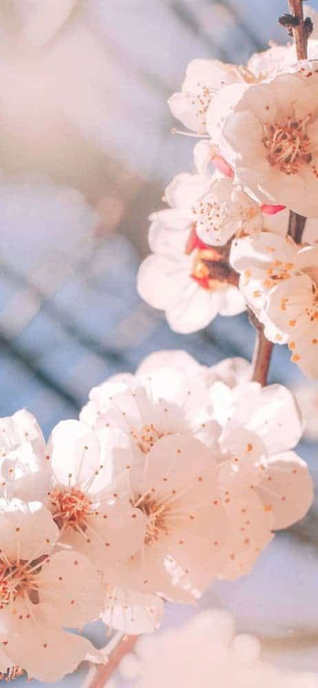خلفيات ورد للايفون Flower Iphone Wallpaper Flower Screensaver Flower Lockscreen
