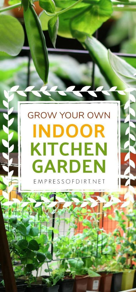 How To Grow Vegetables Indoors Year Round Indoor Vegetable