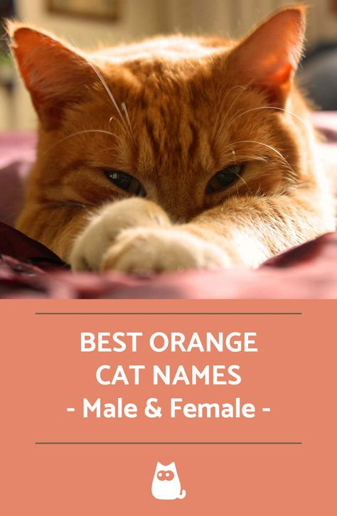 A Complete List With Over 50 Ideas Tabby Cat Names Cat Names Orange Tabby Cats