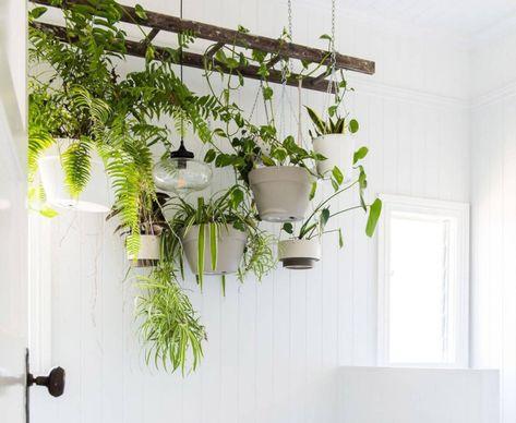 Room With Plants, House Plants Decor, Bathrooms With Plants, Live Plants, Good Bathroom Plants, Garden Bathroom, Dream Bathrooms, Rustic Pot Racks, Pan Storage