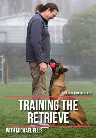 Training The Retrieve With Michael Ellis Dog Training Dog
