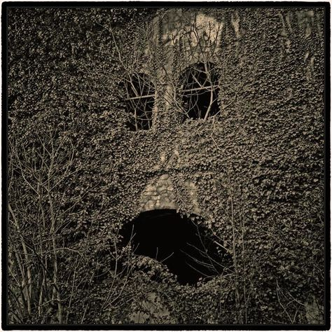 a face in the vines