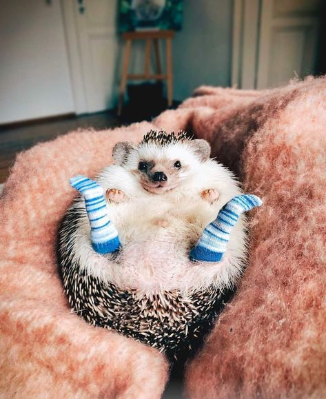 Little socks for good hedgehog boy
